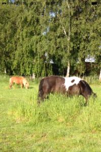geluk paardjes